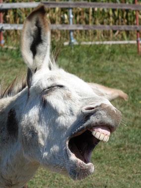 """Karel """"lachend"""""""