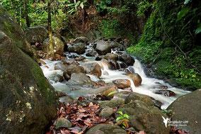 Riviere en forêt - Guadeloupe