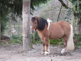 Pony Reiten Wettingen Abenteuer Erlebnis