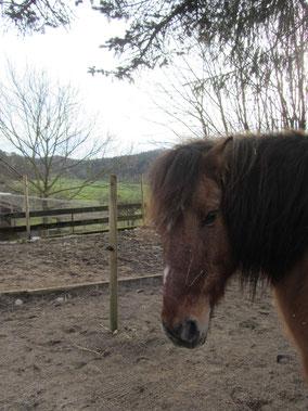 Pony reiten Wettingen