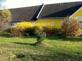 oleander im freiland berwintern oleander haus. Black Bedroom Furniture Sets. Home Design Ideas