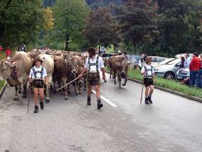 Viehscheid Bad Hindelang