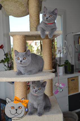 Photo de 3 chatons nés en 2019