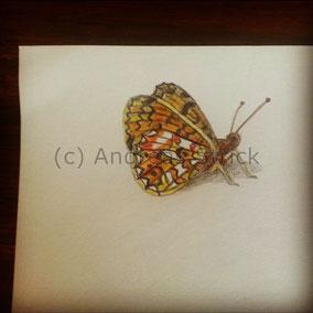 Schmetterling, Aquarellstifte auf Papier