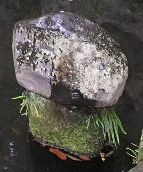 河童の爪かけ石 (水神宮社殿 右奥の池)