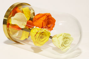 ROSES STABILISEES SOUS CLOCHE