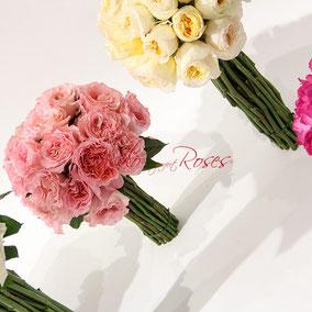 Roses de jardin, couleurs pastelles