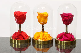 ROSES STABILISEES, PETITES CLOCHES