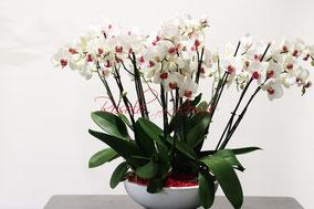 ORCHIDEES ET POT