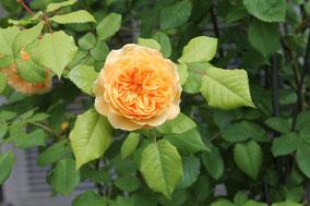 vielfalt natur , rosengarten, Sepp Doboczky