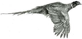 Птицы/Birds