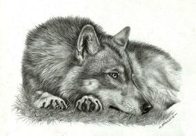 Животные/Animals