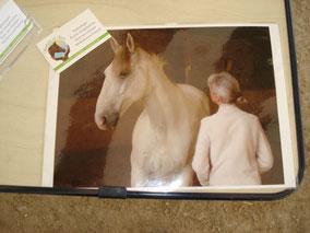 Sandrine Fournier - Communication animale - médiatrice animale - médiation animale - sophro cheval - fleurs de Bach - Sophrologie - Soins animaux bien être animal