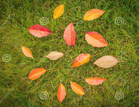 leaves on a green lawn