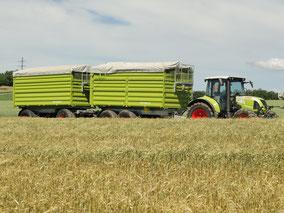 Obristhof Anhänger für Getreide
