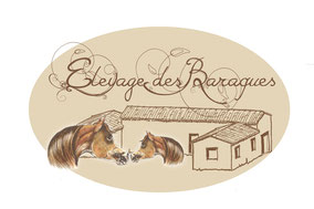 Elevage & Centre d'insémination de chevaux Arabes
