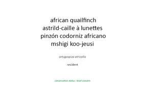 african quailfinch, astril-caille à lunettes, pinzon codorniz africano