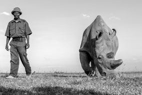 northern white rhino, rhinocéros blanc du nord, rinoceronte blanco del norte, Ol Pejeta