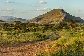 Samburu, Buffalo Springs and Shaba