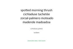 spotted morning thrush, cichladuse tachetée, zorzal-palmero moteado