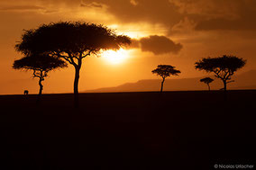Masai Mara ecosystem