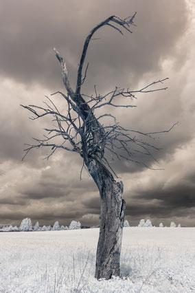 Baum, tree, Infrarot, Zypern, Holger Nimtz, Infrared, Fotografie, Allee, Bäume, Havelland, Photography, Infrarotaufnahme, IR,