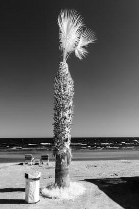 Cyprus, Mittelmeer, Strand, beach, Palme, palm tree, Infrarot, Zypern, Holger Nimtz, Infrared, Fotografie, Allee, Bäume, Havelland, Photography, Infrarotaufnahme, IR,