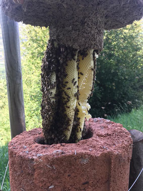 Bienenhäuser beehouse