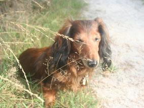 Alternatieve geneeswijzen: aromatherapie voor paarden en honden voor MBO DIer