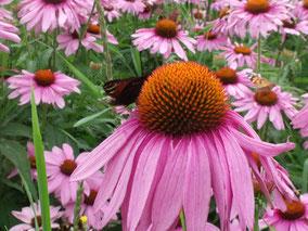 Herb sience, maak je eigen medicijn van een plant voor MBO welness & lifestyle, apothekersassistenten, activiteitenbegeleiders