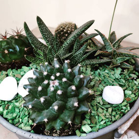 Cesta de cactus 28,50€. Se hacen a medida.
