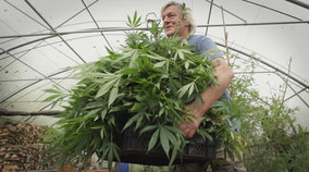 activist et planteur de cannabis bio dans son serre en frieslande