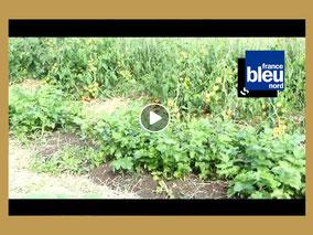 Reportage de Rafaela Biry-Vicente du 23 août 2017 pour France Bleue Nord