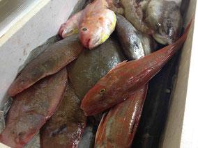 和歌山の漁師さんから届いた鮮魚。2月のパスタメニューは魚介料理が多めです。