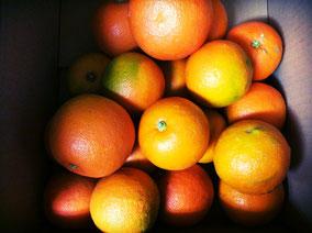 冬の楽しみ 柑橘 今回は和歌山の橙