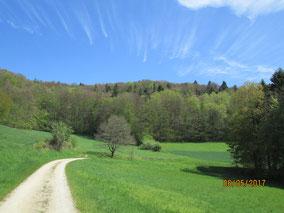 05/17: WT Richtheim: Frühling im Jura