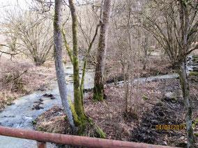 WT Rothenbg.: Frühlingserwachen am Steinbach