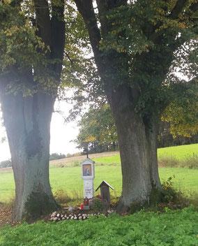 10/17 IVV Grafenwöhr: Bild-stock südöstl. Grafenwöhr