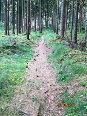 Herrliche Wanderwege (oberhalb Fensterbachquelle)