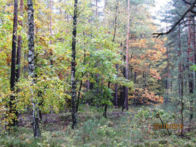 WT Heroldsberg (Herbst im Reichswald)