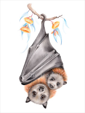 """Flying Fox Cuddles"" Print ~$27-79"