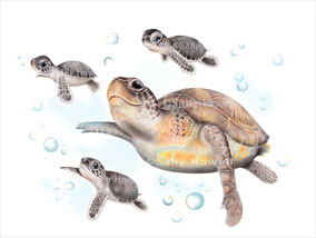 """Sea Turtle Family"" Print $27-79"