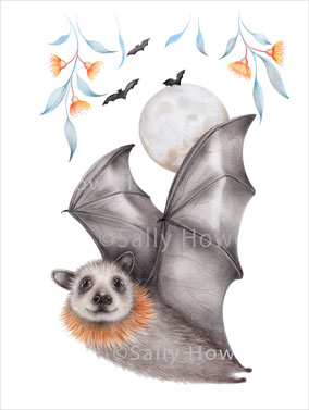 """Flying Fox Moon"" Print $27-79"