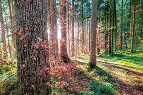Entspannung und Erholung im Wald - Waldbaden mit der WurzelMargit