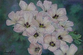 oxalis, oil on canvas, 40x60 cm, 2014