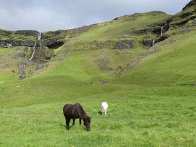 IJslandse-paarden-zuidkust-rondje-IJsland.jpeg