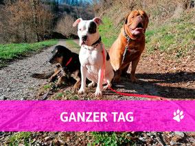 Hundehort Rudel-Treff -Foto Ganzer Tag anmelden