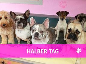Hundehort Rudel-Treff -Foto Halber Tag anmelden