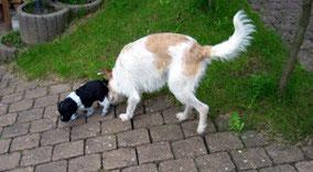 erster Hundebesuch