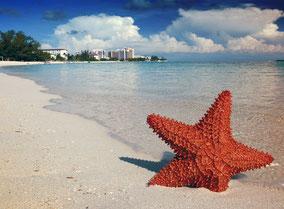 MAG Lifestyle Magazin Reisen Urlaub Fernreisen Flugreisen Bahamas Nassau Paradise Island schwimmende Schweine